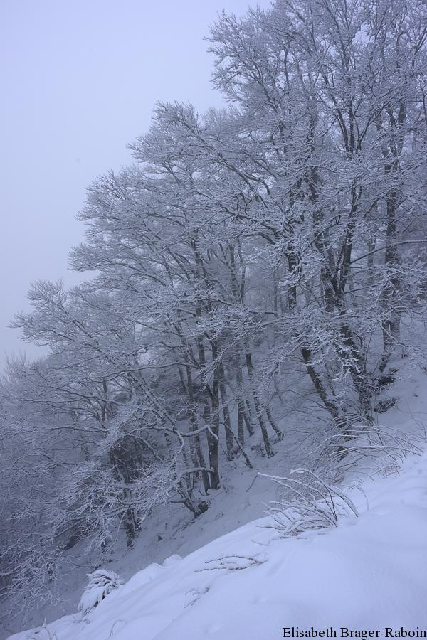 L'Aigoual en hiver