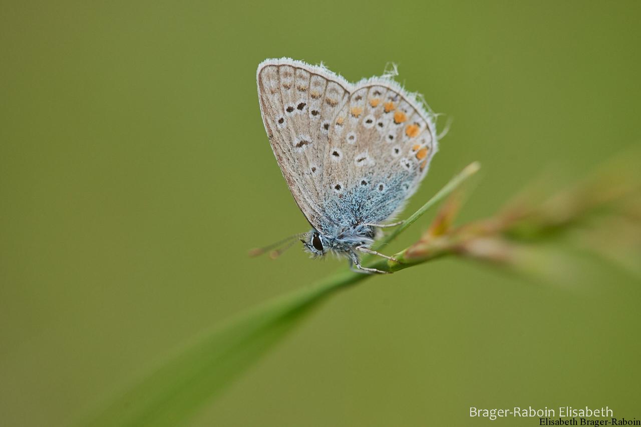 Petit papillon sous un temps gris