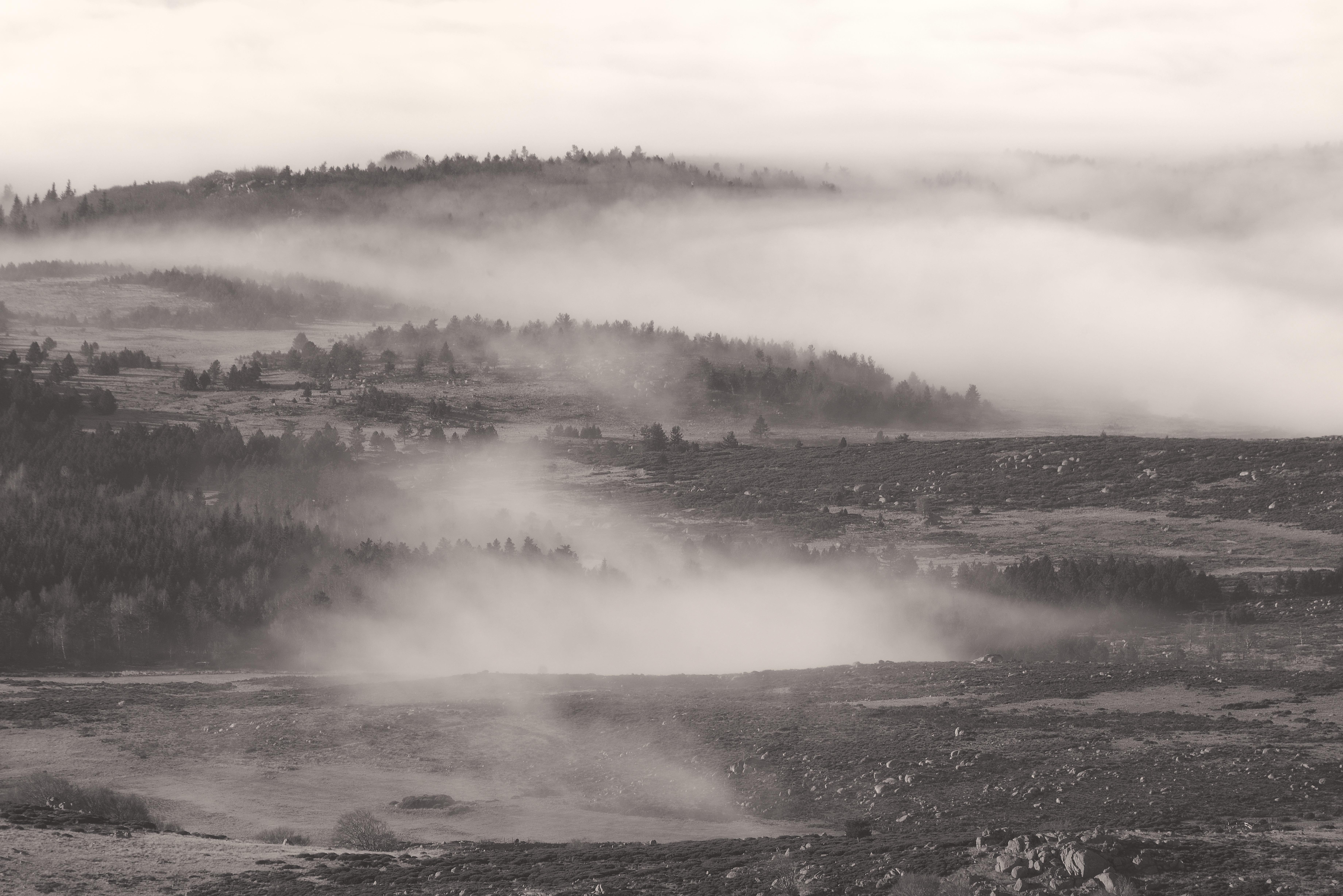 La plaine du Tarn - Mont Lozère