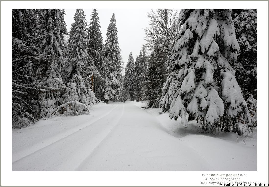 La forêt de l'Aigoual