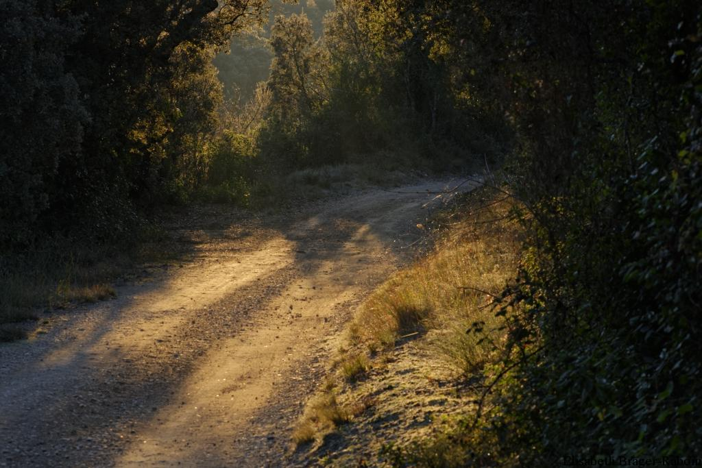 Chemin doré par le soleil