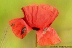 Paysages & Biodiversité